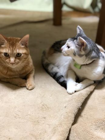 猫長女と猫次女_e0355177_14493925.jpg