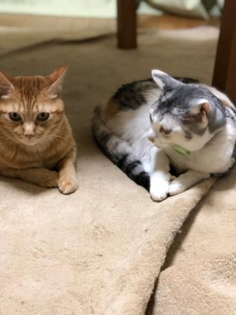 猫長女と猫次女_e0355177_14500481.jpg