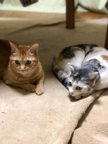 猫長女と猫次女_e0355177_14525994.jpg