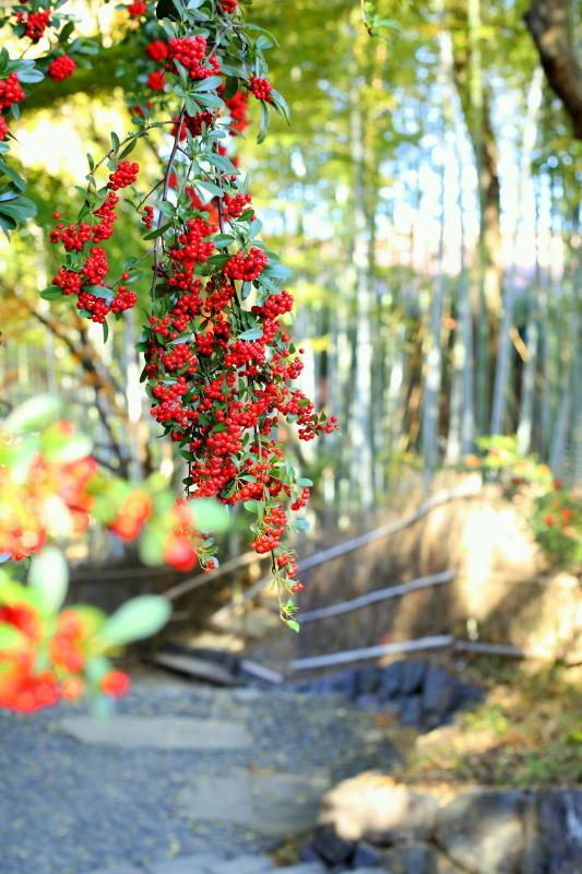 白鳥庭園_f0367980_13092093.jpg