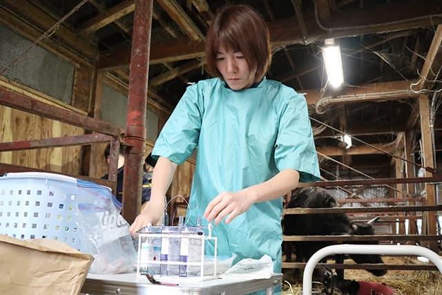 牛の帝王切開手術その2_c0126281_11390688.jpg