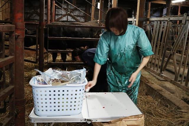 牛の帝王切開手術その2_c0126281_11403097.jpg