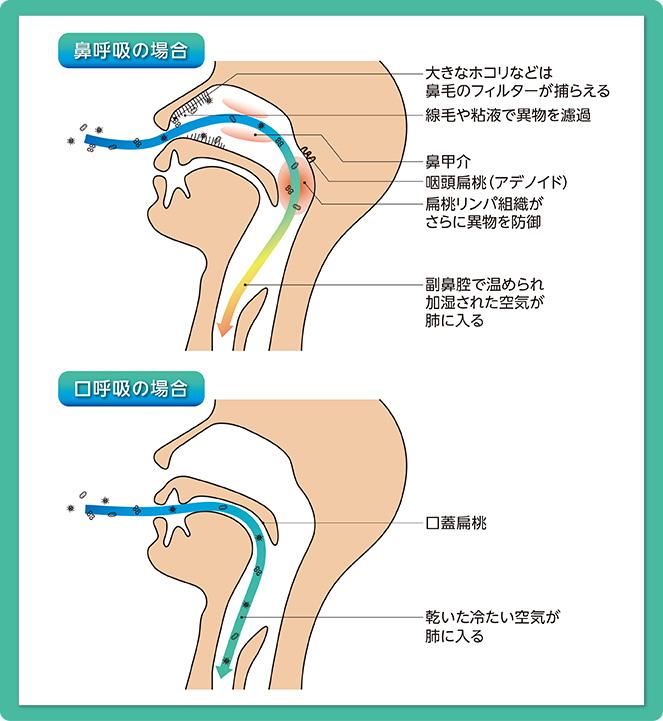 鼻呼吸口呼吸_f0172281_7124015.jpg