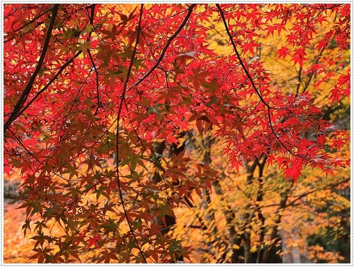 名古屋発、おひとり参加のツアー 備忘録 その2 多良峡から鶏足寺、その前に昼食もね_b0175688_23474525.jpg