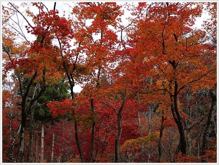 名古屋発、おひとり参加のツアー 備忘録 その2 多良峡から鶏足寺、その前に昼食もね_b0175688_23475541.jpg