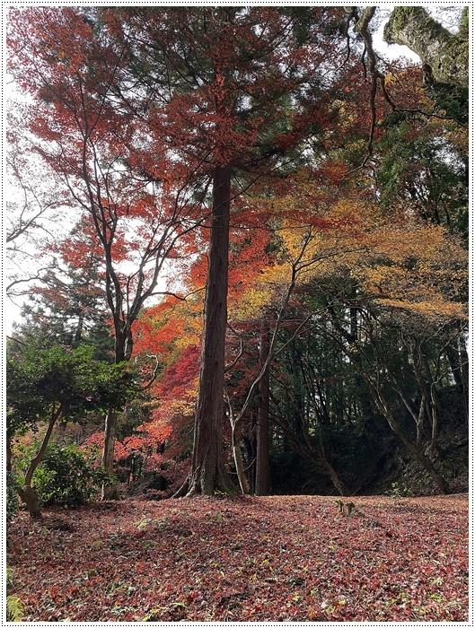 名古屋発、おひとり参加のツアー 備忘録 その2 多良峡から鶏足寺、その前に昼食もね_b0175688_23482841.jpg