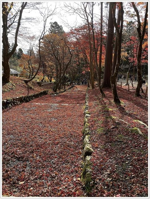 名古屋発、おひとり参加のツアー 備忘録 その2 多良峡から鶏足寺、その前に昼食もね_b0175688_23484051.jpg