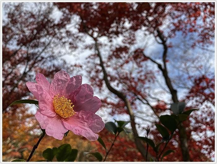 名古屋発、おひとり参加のツアー 備忘録 その2 多良峡から鶏足寺、その前に昼食もね_b0175688_23524669.jpg