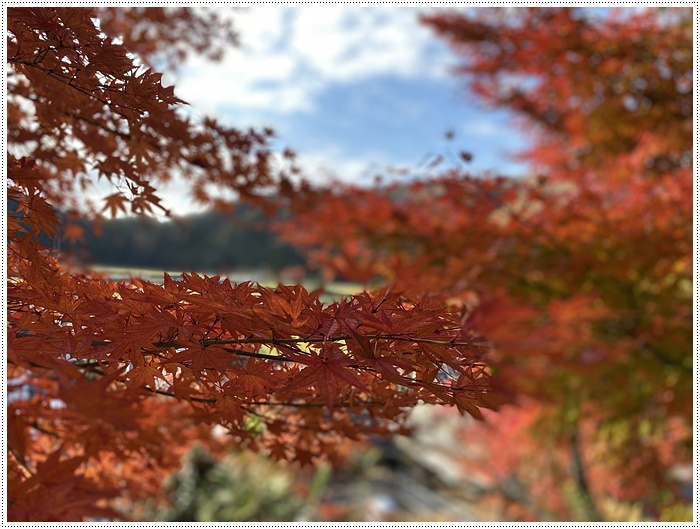名古屋発、おひとり参加のツアー 備忘録 その2 多良峡から鶏足寺、その前に昼食もね_b0175688_23594142.jpg