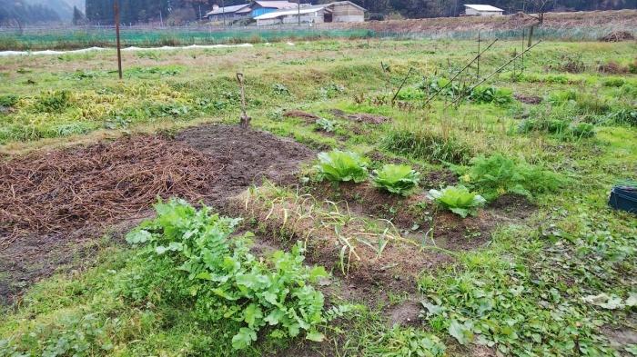 ちょこっと収穫~~~_c0057390_18000247.jpg