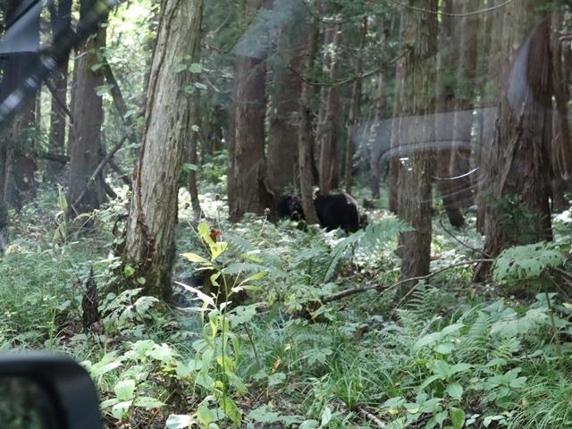 藤田八束鉄道の旅、恐山を訪ねて・・・・むつ市・渡辺水産のベビーホタテと裂きイカ、これ最高です。美味しさの秘訣は自然の恵みにありました。_d0181492_13082402.jpg