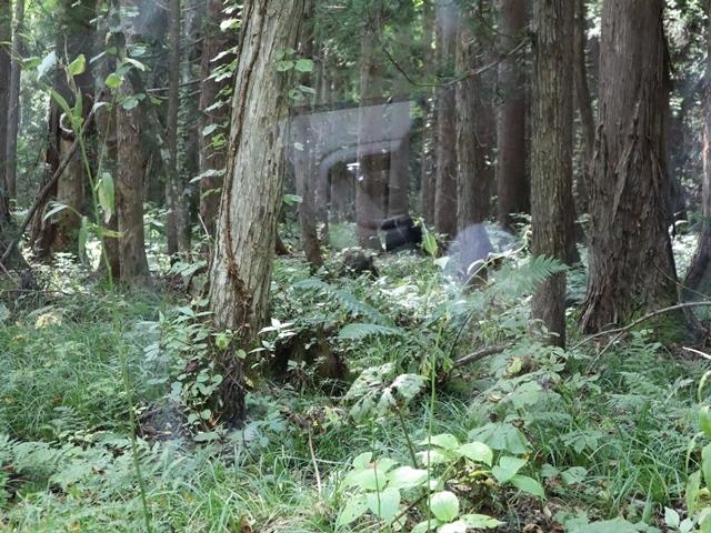 藤田八束鉄道の旅、恐山を訪ねて・・・・むつ市・渡辺水産のベビーホタテと裂きイカ、これ最高です。美味しさの秘訣は自然の恵みにありました。_d0181492_13091862.jpg