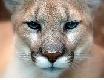 singa gunung_a0051297_06164580.png