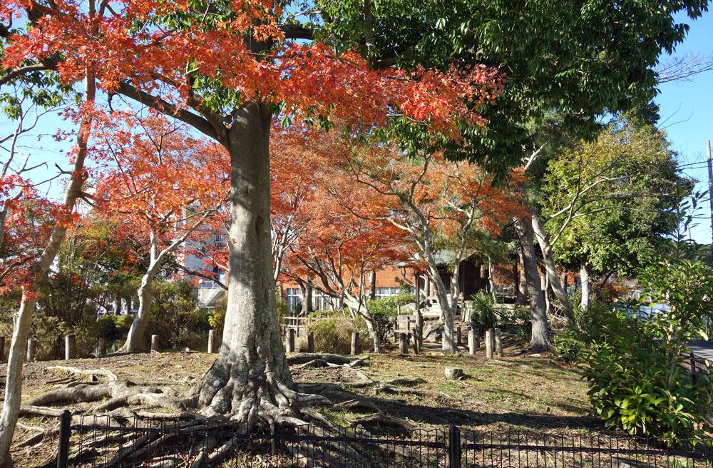 歳末の東金・中央公園_b0114798_15371097.jpg