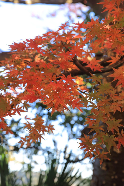 紅葉♪_b0275998_14085681.jpg