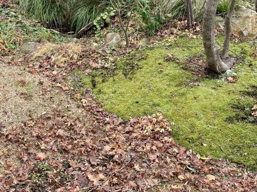 庭の美しく緑々した苔_e0054299_14395263.jpeg