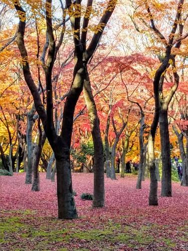 秋のおわり冬のはじまり_a0057402_00175254.jpg
