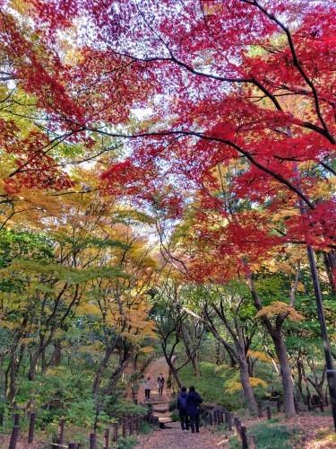 秋のおわり冬のはじまり_a0057402_00293691.jpg