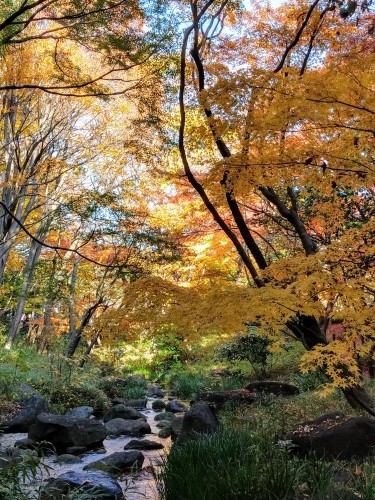 秋のおわり冬のはじまり_a0057402_00385479.jpg