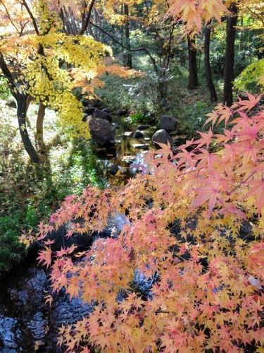 秋のおわり冬のはじまり_a0057402_00412709.jpg