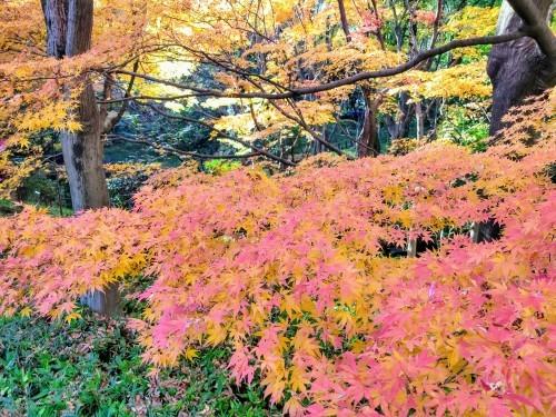 秋のおわり冬のはじまり_a0057402_00443286.jpg