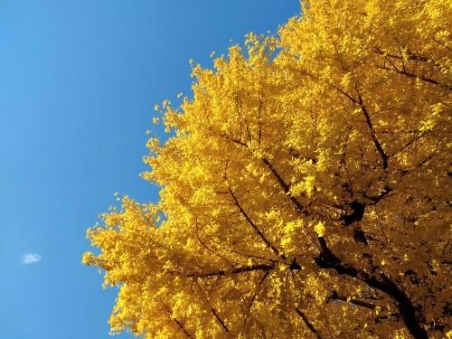 秋のおわり冬のはじまり_a0057402_01144170.jpg