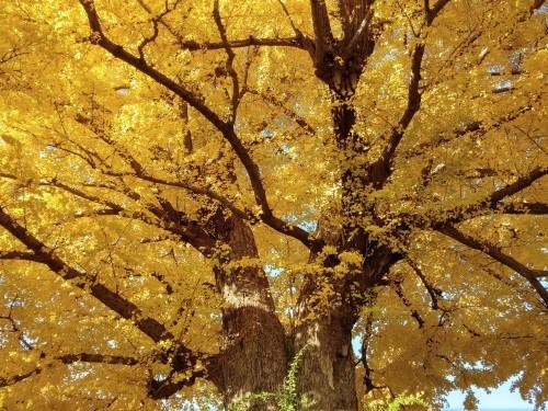 秋のおわり冬のはじまり_a0057402_01180817.jpg