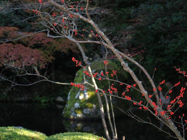知恩院 方丈庭園 -京都市東山区-_f0149209_21111541.jpg