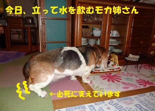 f0121712_00055008.jpg
