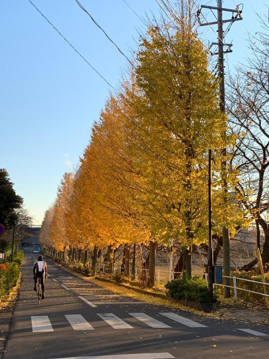 ヘルシーロードの紅葉風景と富士山_f0296312_18355676.jpg
