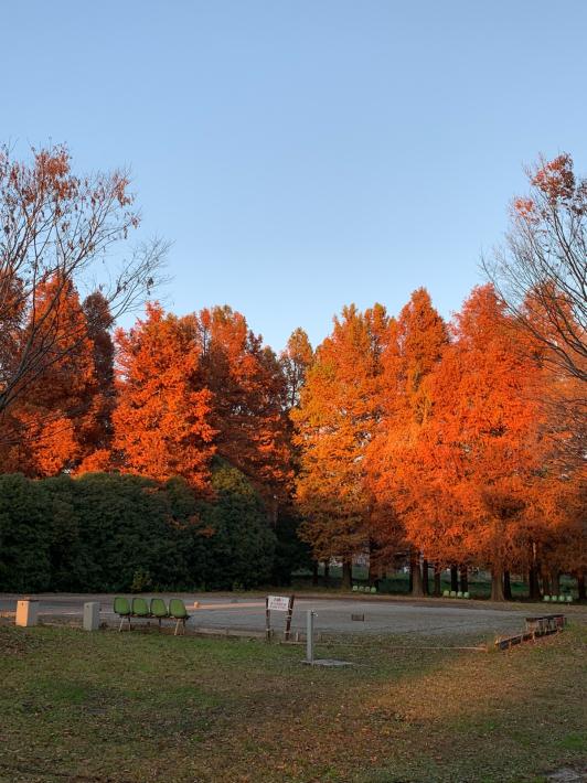 ヘルシーロードの紅葉風景と富士山_f0296312_18361721.jpg