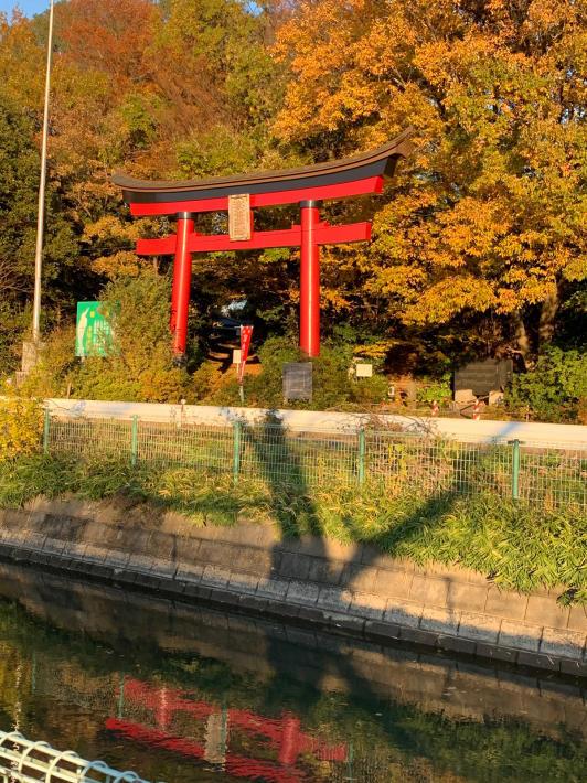 ヘルシーロードの紅葉風景と富士山_f0296312_18392938.jpg