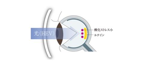 ( ´ⅴ`)「眼の健康を守るルティーナレンズ」 ■京都ファミリー店■_f0349114_17334458.png