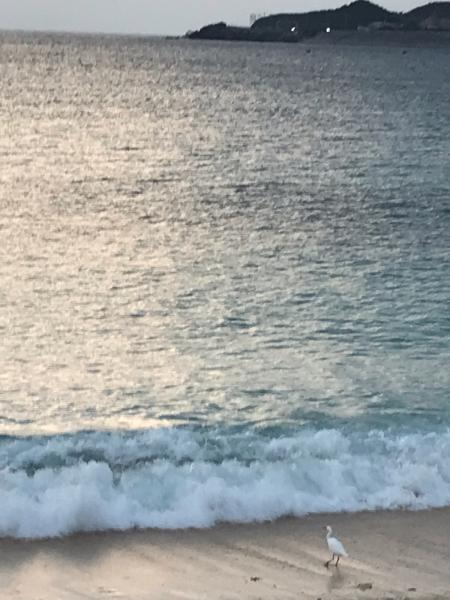 2019 沖縄の旅 7 @ 浜辺にて_b0157216_23063213.jpg