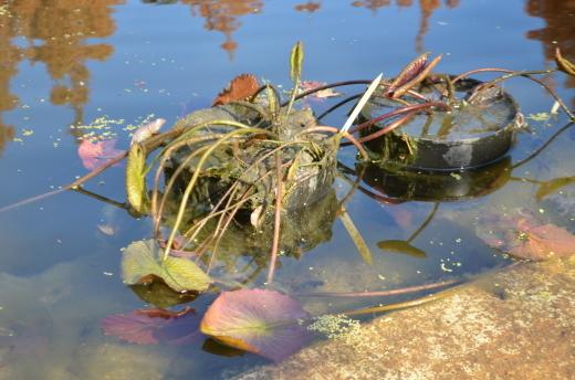 【休園中】水の庭の作業風景_e0135518_16424992.jpg