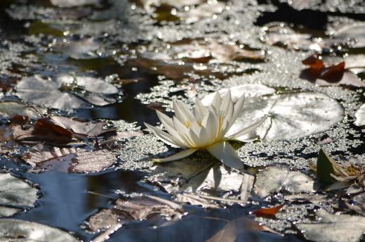 【休園中】水の庭の作業風景_e0135518_16442238.jpg