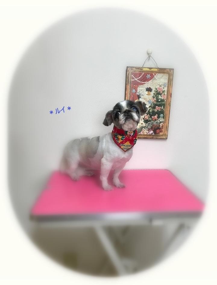 ラムちゃん3姉妹_a0315823_20160663.jpg