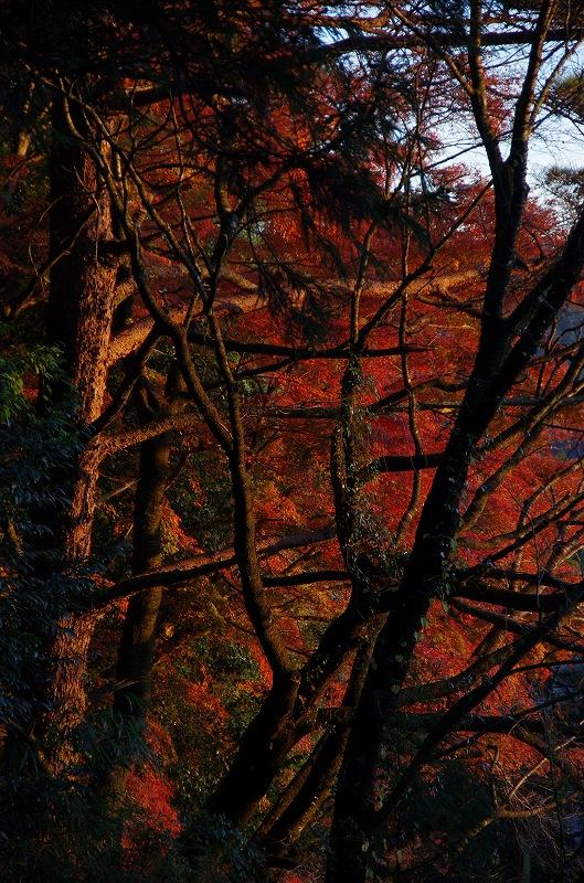 紅葉の季節から冬へ_d0052327_19105671.jpg