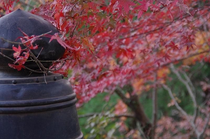 紅葉の季節から冬へ_d0052327_19111017.jpg