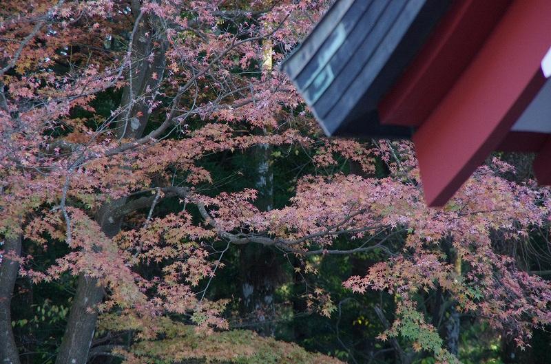 紅葉の季節から冬へ_d0052327_1945787.jpg