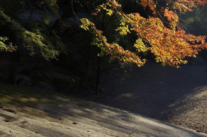 紅葉の季節から冬へ_d0052327_1955065.jpg