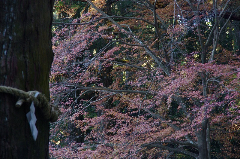 紅葉の季節から冬へ_d0052327_1961536.jpg