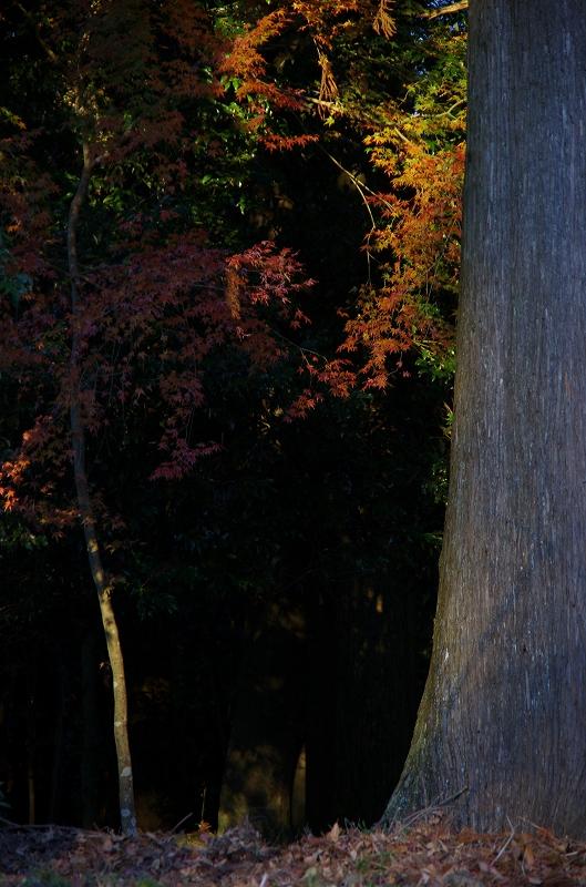 紅葉の季節から冬へ_d0052327_1965280.jpg