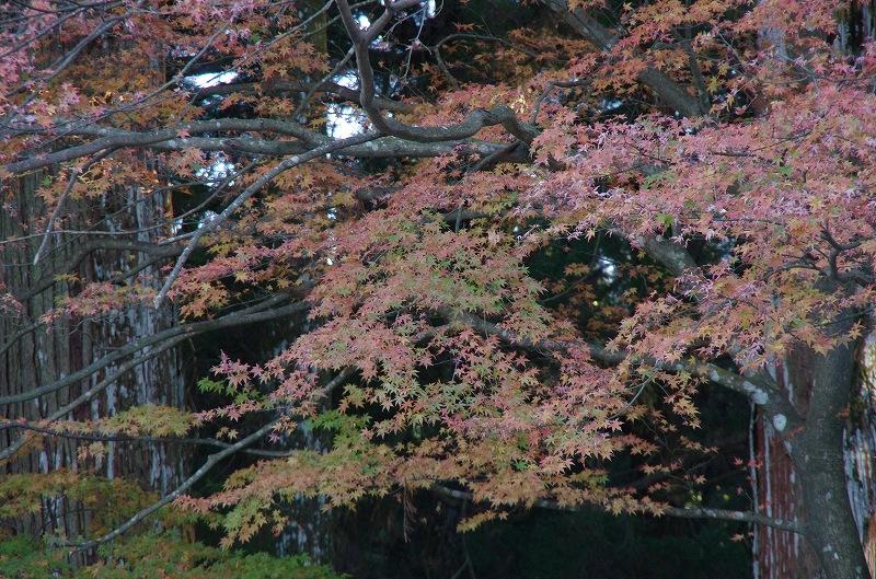 紅葉の季節から冬へ_d0052327_1984112.jpg