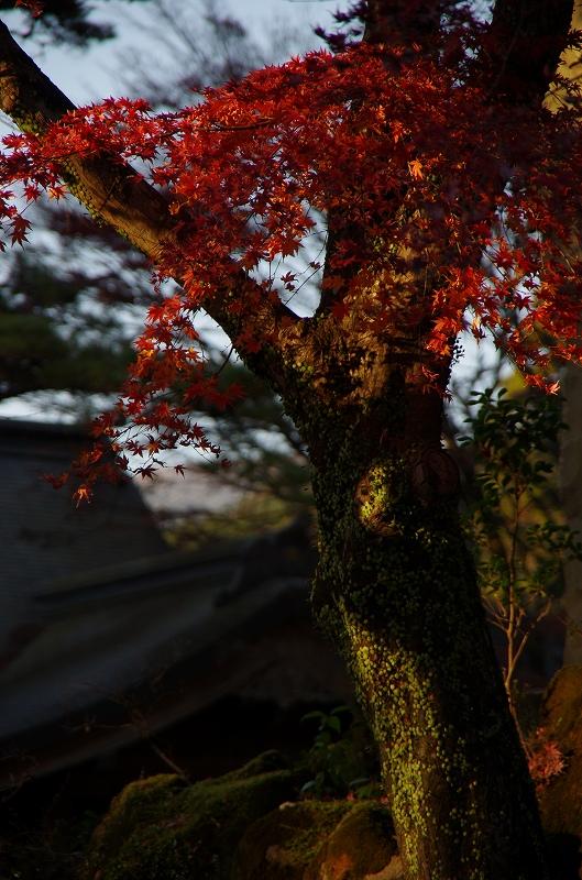 紅葉の季節から冬へ_d0052327_1992342.jpg