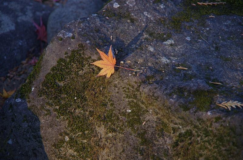 紅葉の季節から冬へ_d0052327_199404.jpg