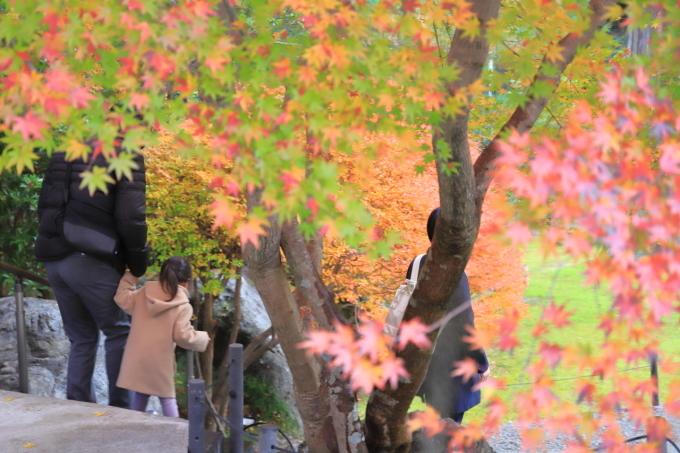 【徳明園】群馬紅葉撮影 part 4_f0348831_22470525.jpg