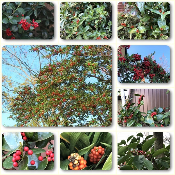 散歩道見つけた赤い実のなる木(^^♪_e0052135_18045034.jpg