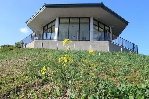 関崎灯台でフウトウカズラを見る!_e0272335_1874360.jpg
