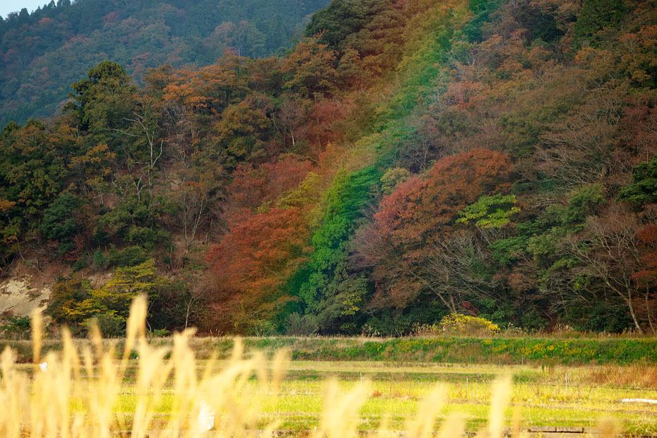 Rainbows_c0067040_22461085.jpg